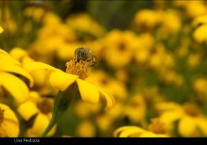 plantilla-fotos-web8